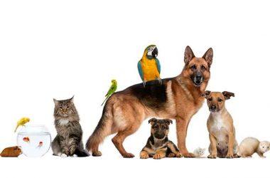 faire le bon choix pour un animal de compagnie