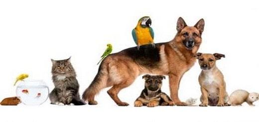 Comment choisir un animal de compagnie